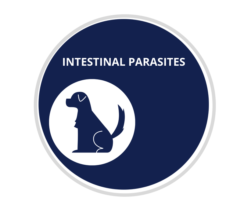 Internal Parasites in Dogs